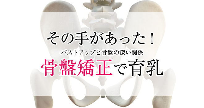 骨盤矯正でバストアップ?胸と骨盤のゆがみの関係を解説